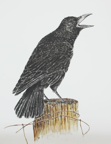 print Something to crow about